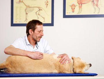 Kleintierphysiotherapie